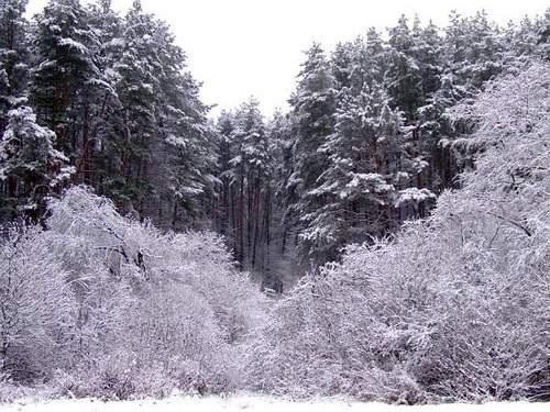 Žiema2